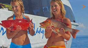 Lady Musgrave Cruises, Great Barrier Reef, Scuba Dive, Snorkelling, Reef Fishing